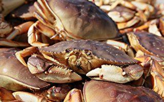 價格確定 舊金山珍寶蟹捕撈季節終於開始