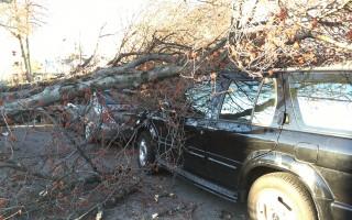 紐約大風肆虐 皇后區樹倒砸四車