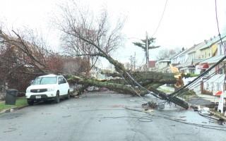 紐約大風樹橫街 雨天恢復艱難