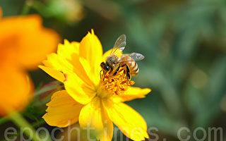 連蜜蜂都需要媽媽