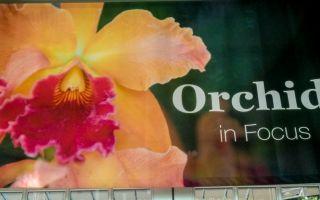 組圖:2016 華府植物園蘭花展