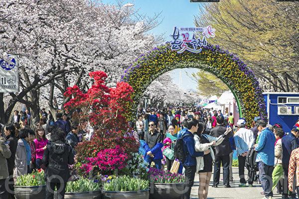 組圖:首爾春花慶典開幕 賞花客人山人海