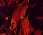 臺北市大安森林公園也有螢火蟲!臺北市政府工務局與大安森林公園之友基金會共同努力,經長時間復育工程,螢火蟲終於再度現身在公園內,吸引許多民眾聞訊賞螢。(大安森林公園之友基金會)