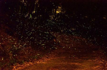 南寮萤火虫。(西拉雅管理处提供)