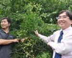 张晋荣(左)返乡从农,介绍梅园经营丰硕成果,农粮署东区分署长陈启荣(右)也表示,全台青梅种植最大面积的是花莲县,而富里乡又是花莲最主要产地。(詹亦菱/大纪元)