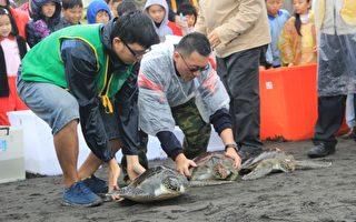 六隻綠蠵龜野放  利澤海攤眾人祈福