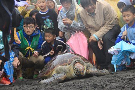 重达97公斤的石头即将返回大海。(谢月琴/大纪元)