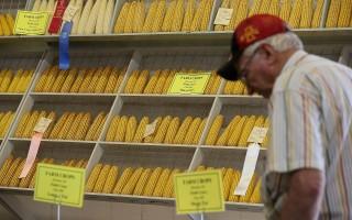 中国公民窃美农业机密 案件增多专家想对策