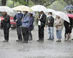 熊本發生強震至今已知48人喪命,南阿蘇村有2人下落不明,搜救工作21日因雨暫停。大津町民眾在大雨中排隊領取中餐。(共同社提供)(中央社)