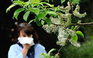 紐約春暖花開 中醫針灸防花粉症