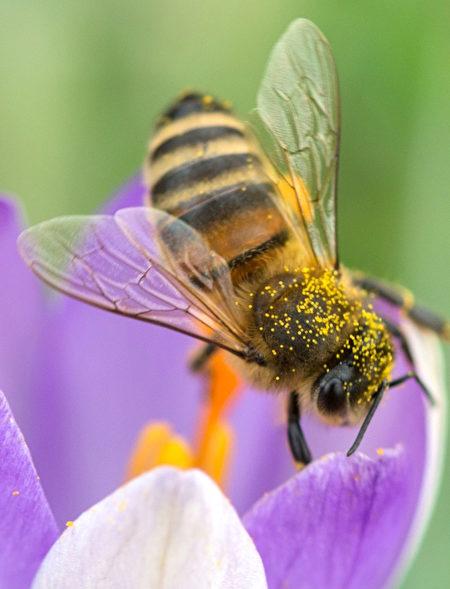 花粉會通過風和各種昆蟲傳播出去。