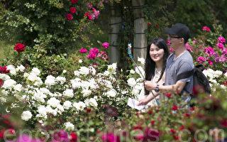 组图:首尔大公园玫瑰花节浪漫登场