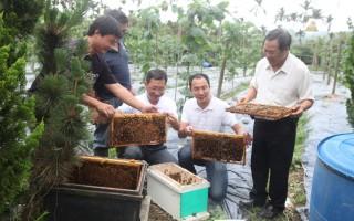 鱼池丝瓜产量低 野放30万授粉蜂
