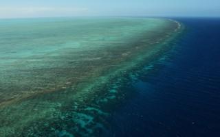 澳科学家:未来五年是挽救大堡礁关键期