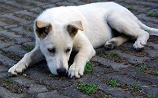 動物收容爆滿 臺農委會要讓犬貓報戶口