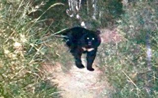 1天撞見2隻黑熊 臺女超開心被封黑熊姐姐
