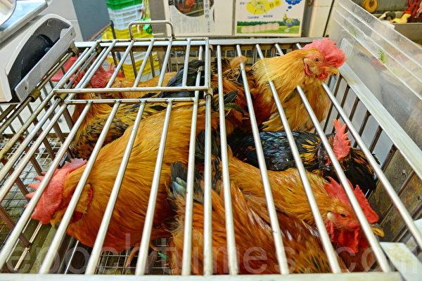 四川南充爆发H5N6高致病性禽流感