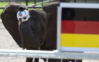 通灵大象预言德国赢乌克兰 再应验