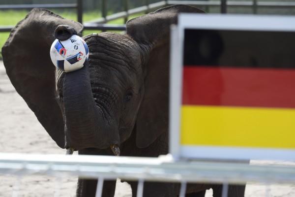 通靈大象預言德國贏烏克蘭 再應驗