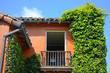 宅邸的一隅,綠藤享受日光攀沿而上。(丁陽明/大紀元)