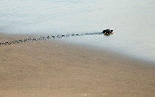 研究:史前全球大滅絕後 海洋生物很快復甦
