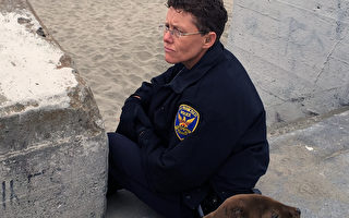 5月30日,出勤的警察特蕾西‧特納(Tracy Turner)在看護飢餓的小海獅。(SFPD提供)