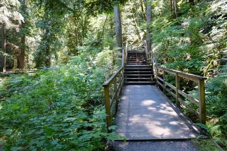 图:哈里森小镇附近有许多山野小径,可供人们前往登山或者丛林探险。(李芝毓/大纪元)