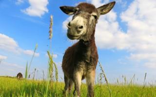驢子報怨的故事