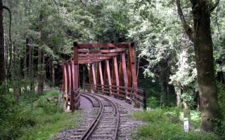 阿里山秘境水山巨木步道 避暑胜地