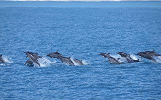 兰阳博物馆2016最有深度的赏鲸文化体验