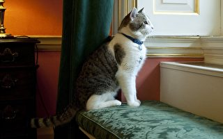卡梅倫週三離開首相府 這隻貓他帶不走