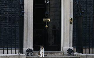 卡梅倫搬離官邸 第一愛貓賴瑞將留下