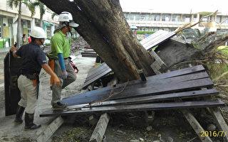大安森林基金會 搶救台東老樹