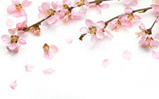 【文史】北宋易学大师邵雍的道德学问