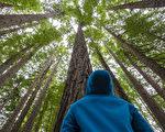 一個BBC生態攝影師在樹梢上的探險筆記(1)