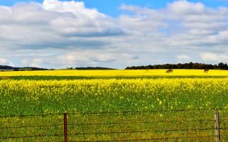 各地野花群相爭艷 澳洲早春提前來臨