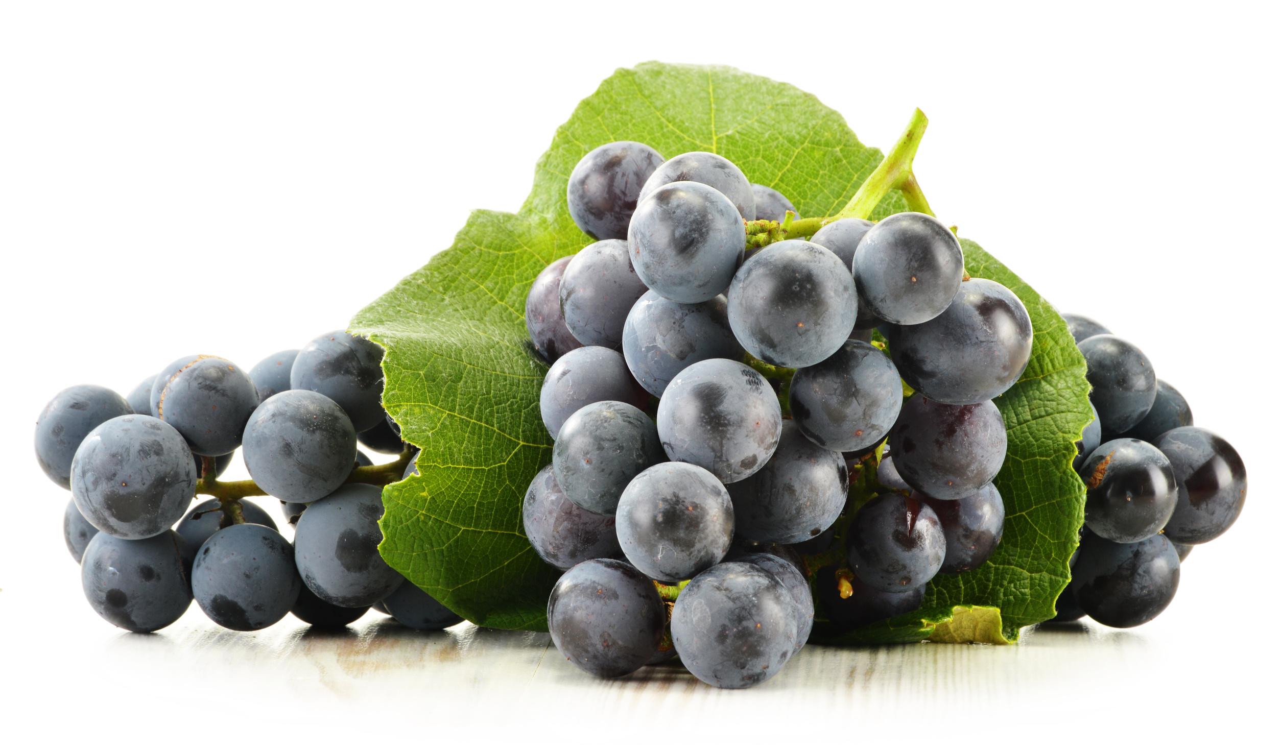 葡萄的圖片搜尋結果