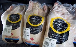 內外需求強勁 加拿大鴨商著手產量翻番