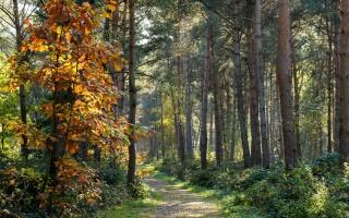樹年輪記錄太陽風暴信息 提供考古線索