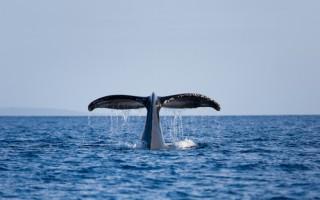 《白鯨傳奇:怒海之心》中所展現的人性光輝