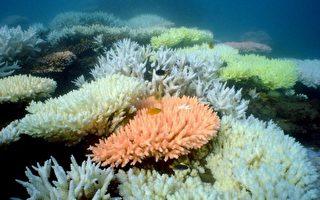 全球珊瑚礁白化事件有可能成为新常态