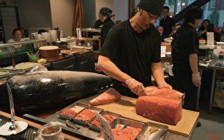 海中珍品盘中餐  天寿司即将推出金枪鱼美食展