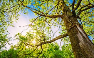許其正:生命樹