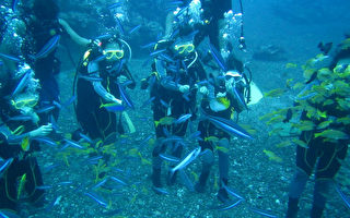 台湾兰屿蓝尾冬鱼鱼群和潜水客亲密互动