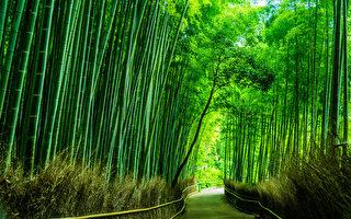 竹子可清肺、明目、止嗝 中醫教你怎麼吃