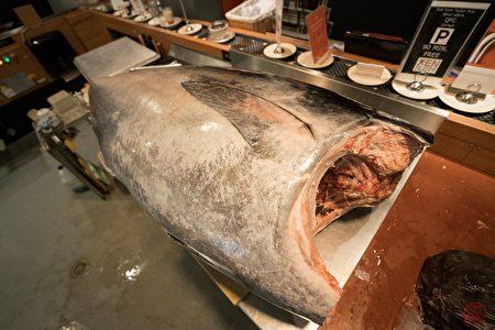 海中珍品——野生蓝鳍金枪鱼。(天寿司提供)