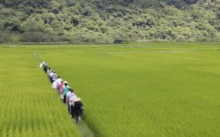 台研究:有機生態除蟲 大勝噴農藥
