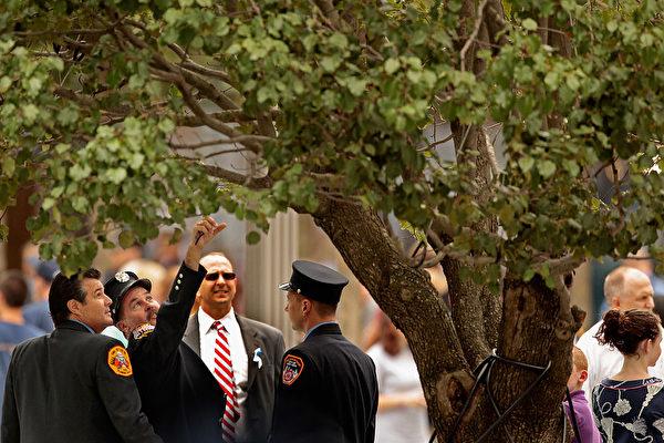 纽约911纪念广场上的幸存树。(Somodevilla/Getty Images)