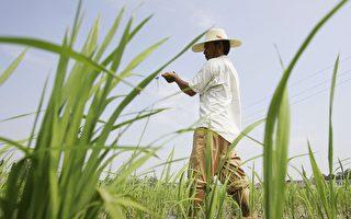 中共想要转基因食品 但是中国人民不想要