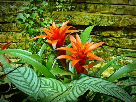 鳳梨科植物。(圖片來源:pixabay)